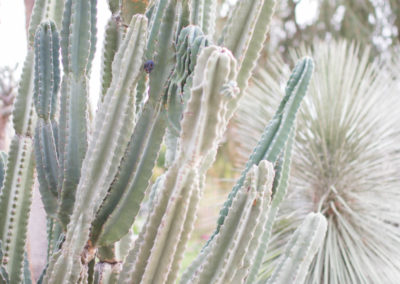 Cactus Collection-22